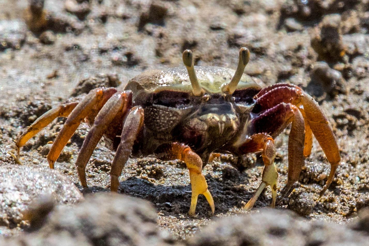 crab-7565