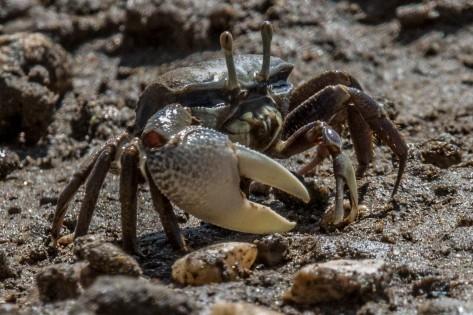 crab-7575