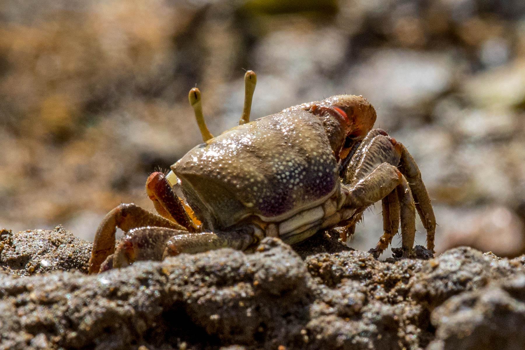 crab-7583