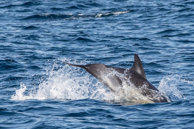 dolphin-7969