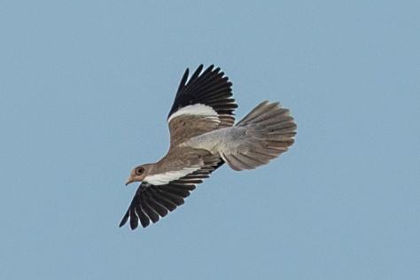 Mangroves-Bird-2021.jpg