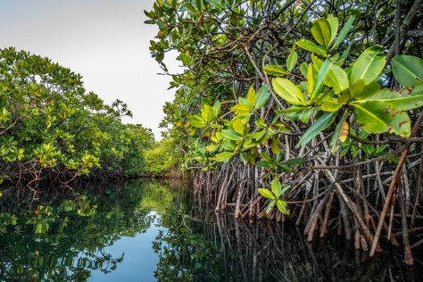 Mangroves-Bird-2052