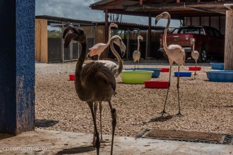 flamingo-09480