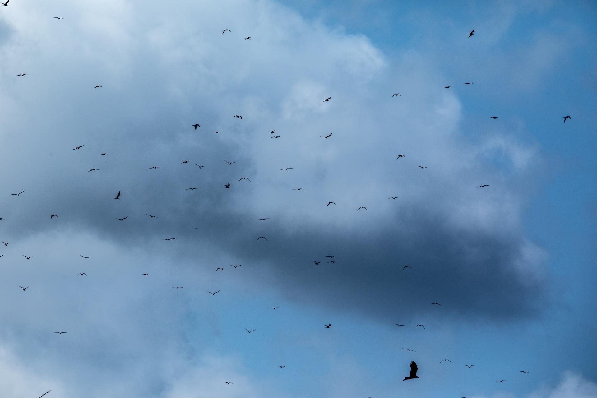 Bird Island-2338