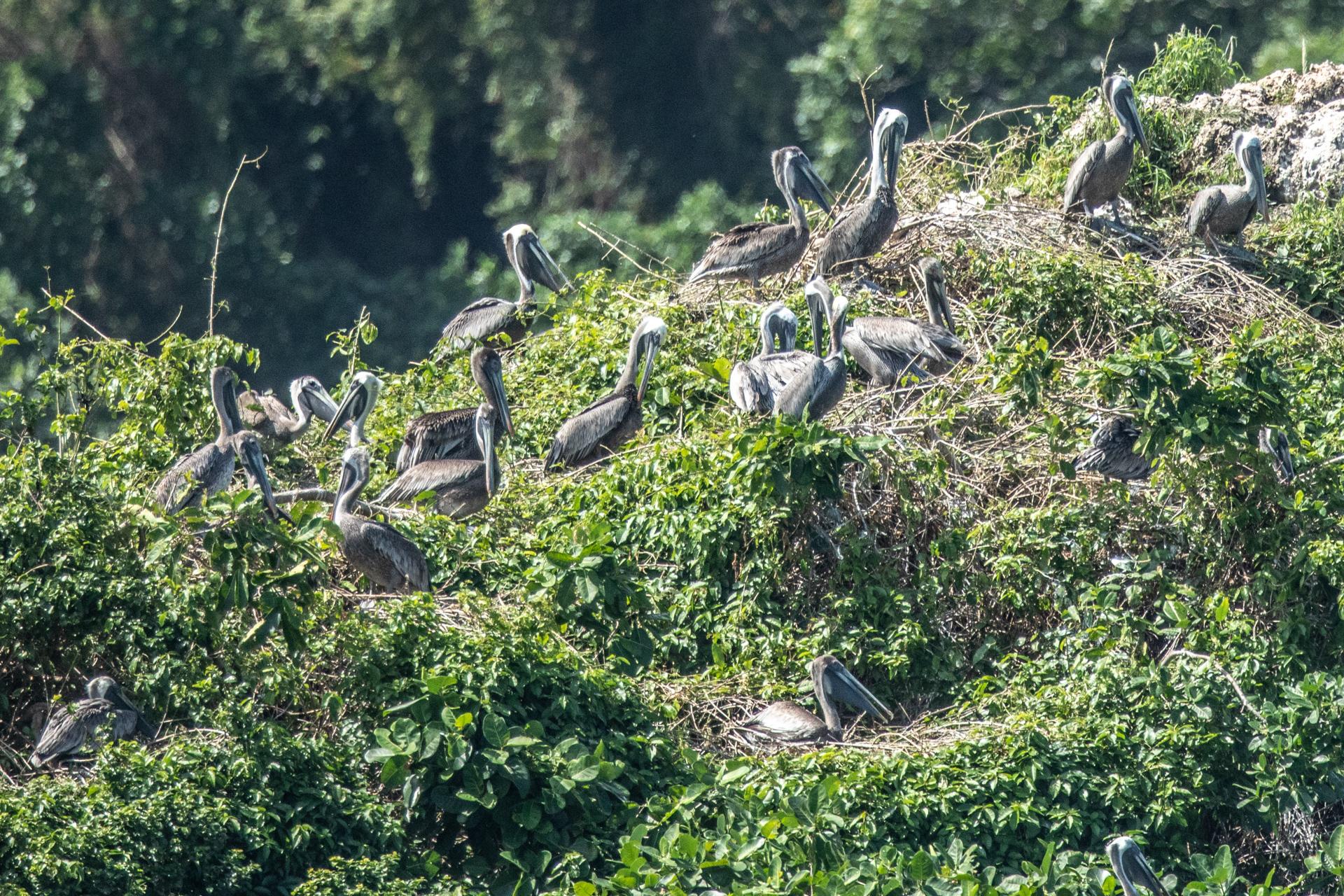 Bird Island-2378
