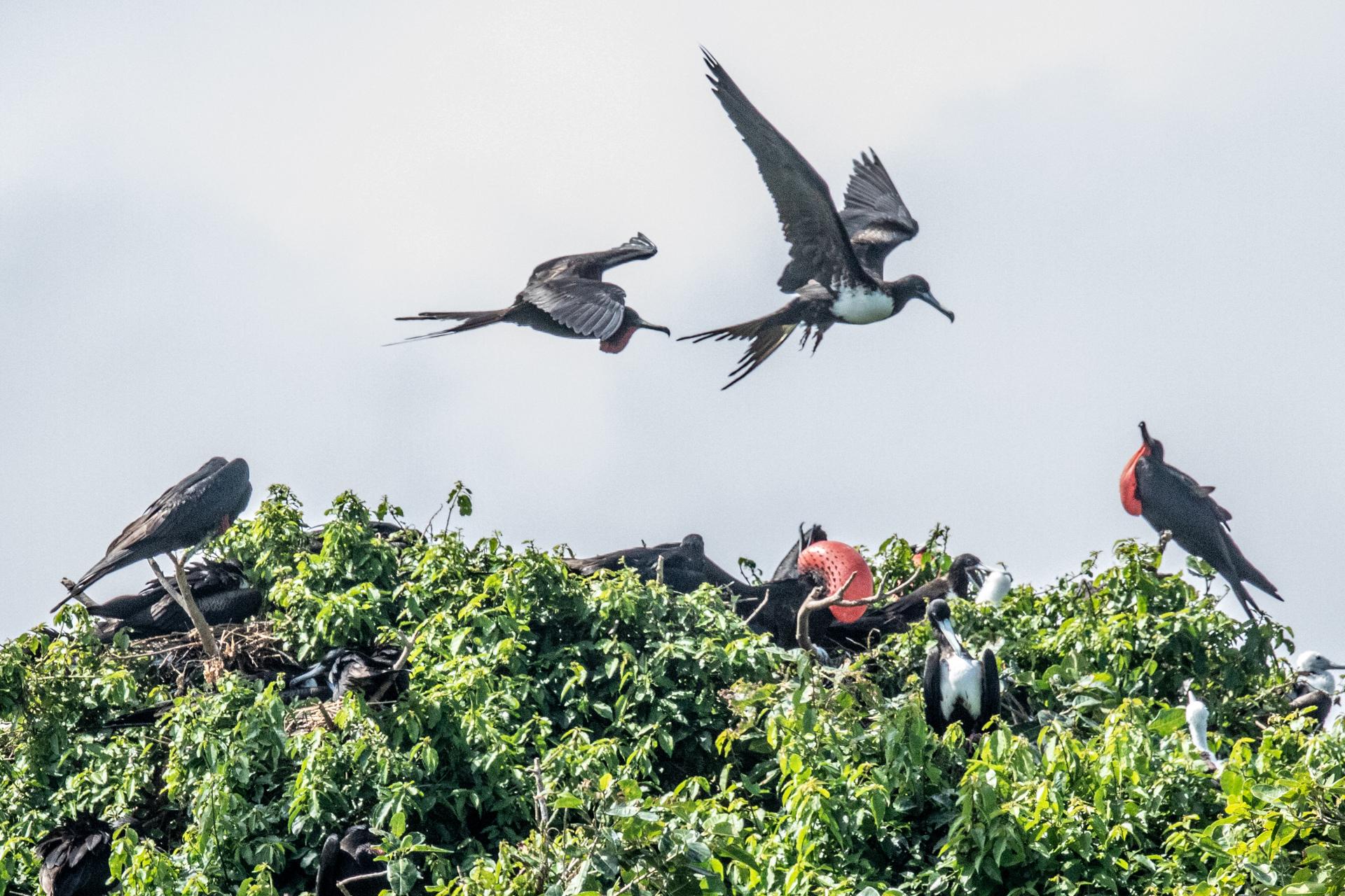 Bird Island-2460