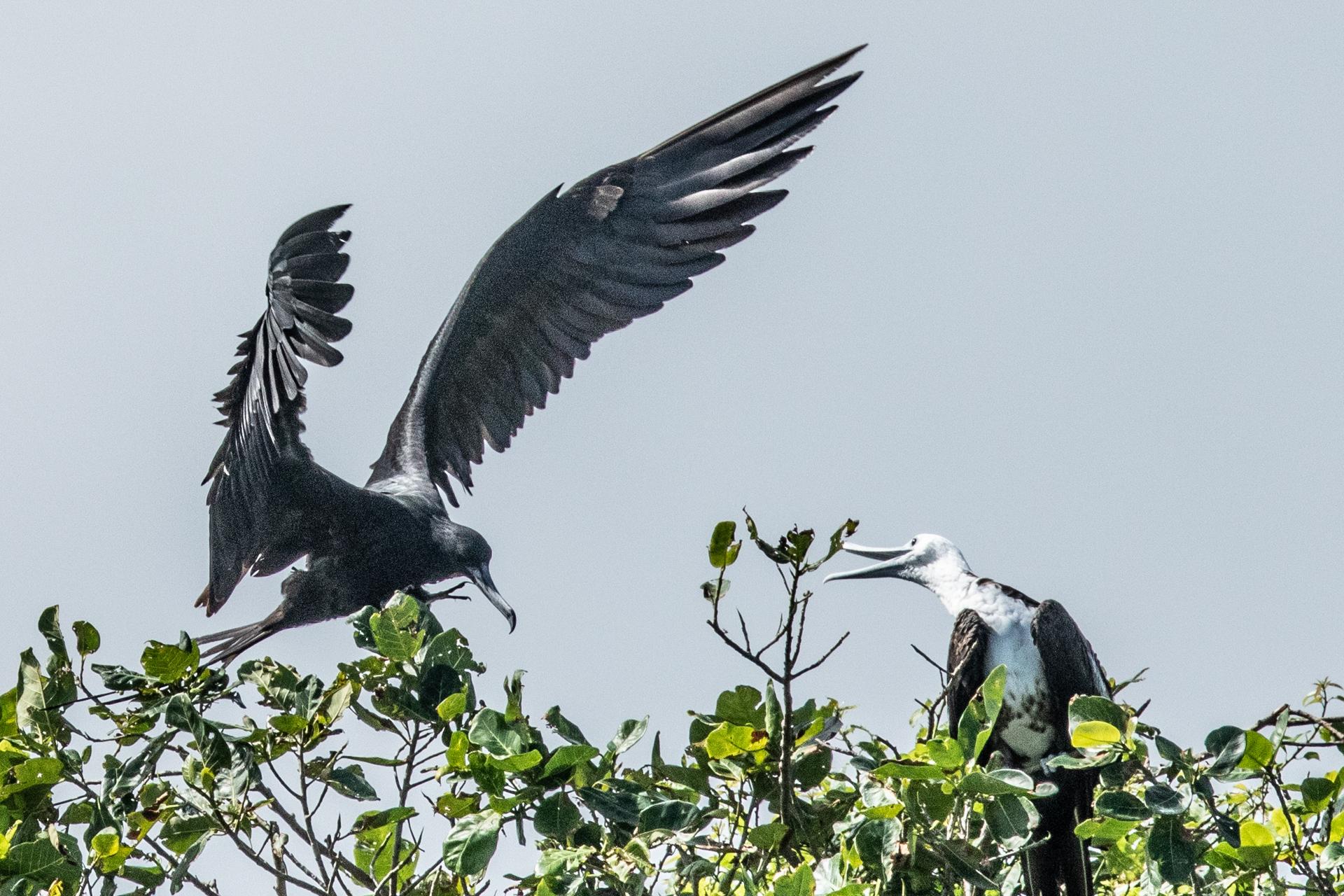 Bird Island-2489
