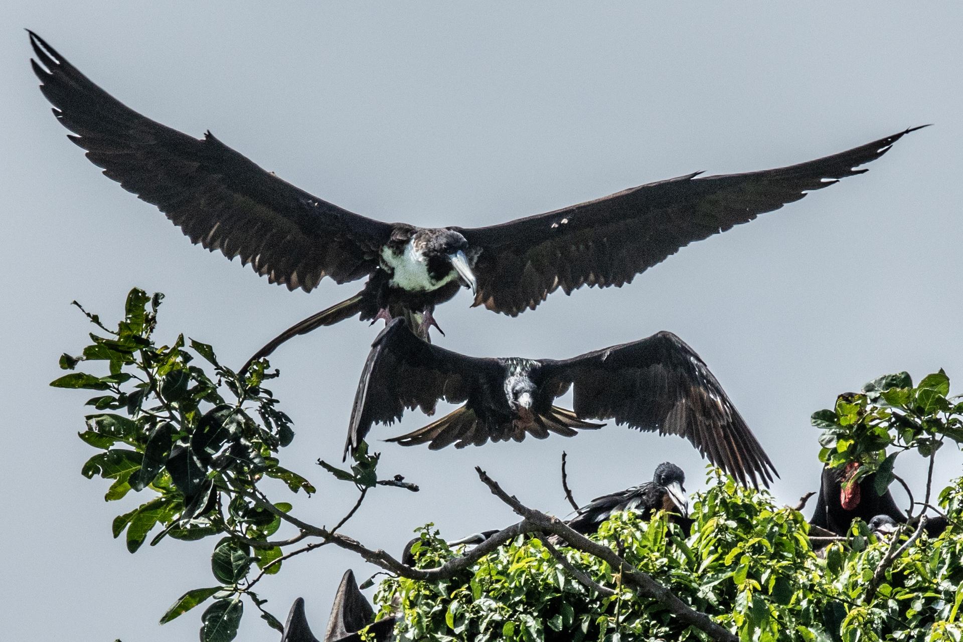 Bird Island-2519