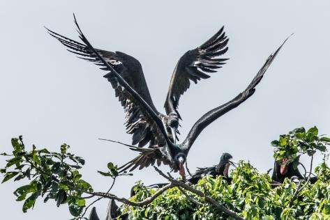 Bird Island-2522