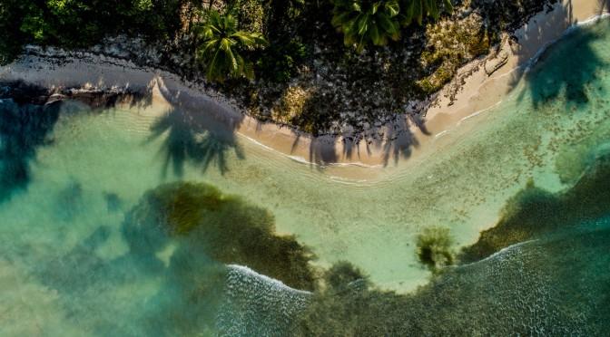 Saona Island Coconut Trees