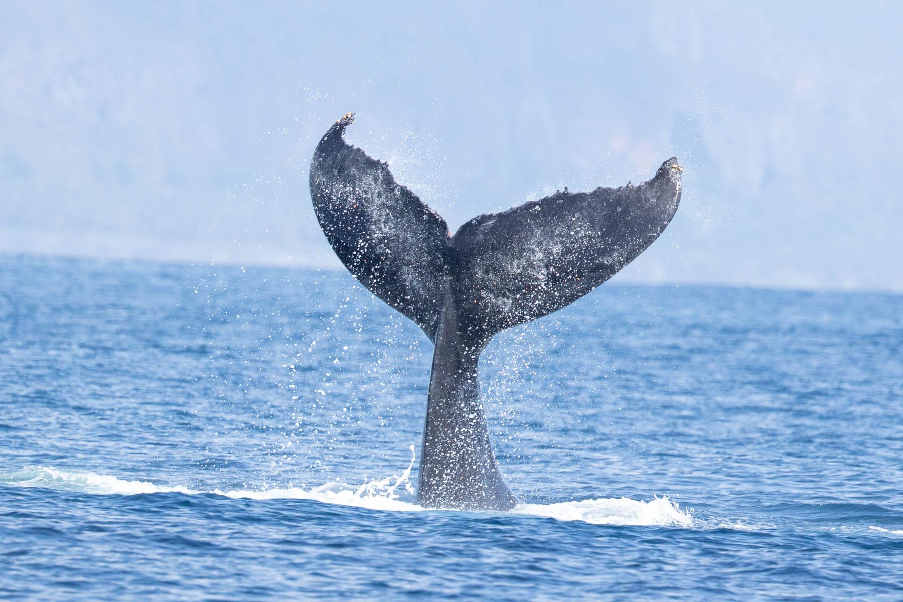 humpback wales-4169